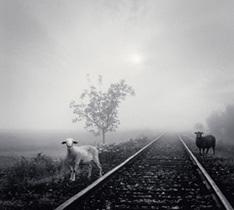MERRY VERY BEST ~白い羊/黒い羊~