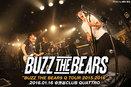 BUZZ THE BEARS