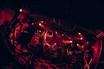 9mm Parabellum Bullet、11/5に豊洲PITにて開催する全国ツアー追加公演のゲストにGRAPEVINEが決定!