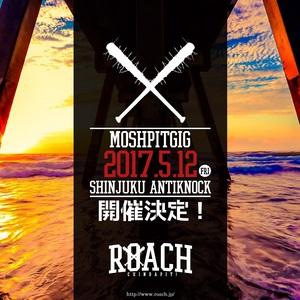 ROACH_live.JPG