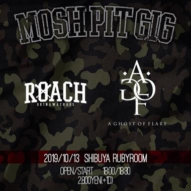 roach1013.jpg